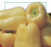 PIMIENTO SOROKSARI (1 gr. - Cerca de 130 Semillas)