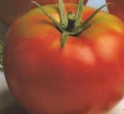 tomates optima