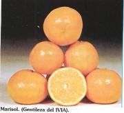 MANDARINO CLEMENTINA MARISOL - 17