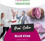 PATATA DE SIEMBRA BLUE STAR FR/NL 28/35 [M] (10...