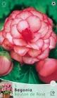 Begonias y Alstroemerias