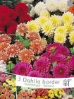 Dalias Border Cactus y Border Decorativas