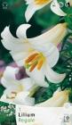 Liliums Trompeta