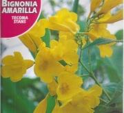 BIGNONIA AMARILLA (1 gr.).