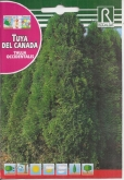 TUYA DEL CANADA - THUJA OCCIDENTALIS
