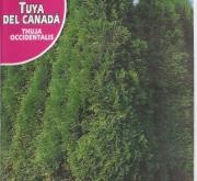 TUYA DEL CANADA - THUJA OCCIDENTALIS