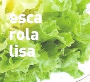 ESCAROLA LISA ECOLÓGICA MSE6