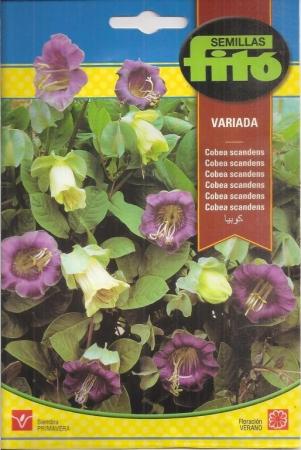 COBEA SCANDENS VARIADA (1 gr.).