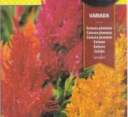 CELOSIA PLUMOSA VARIADA (2 gr.).