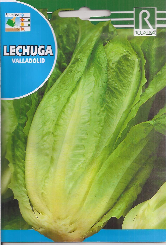 LECHUGA VALLADOLID (6 gr.).