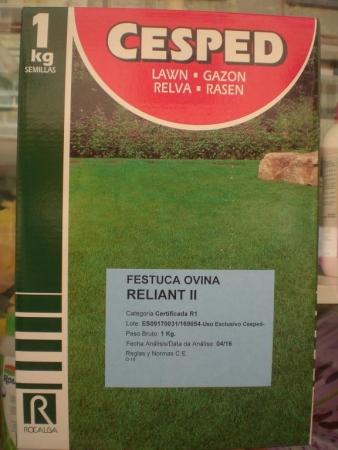 FESTUCA OVINA RELIANT II