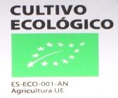 Planteles Profesionales de Hortalizas Online Eco