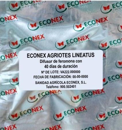 ECONEX AGRIOTES LINEATUS (40 días)