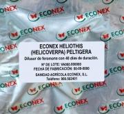 ECONEX HELIOTHIS (HELICOVERPA) PELTIGERA (40 días)