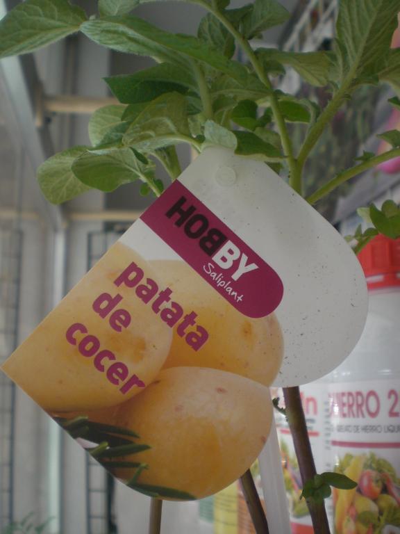 Patata de cocer m fitoagr cola - Tiempo de cocer patatas ...