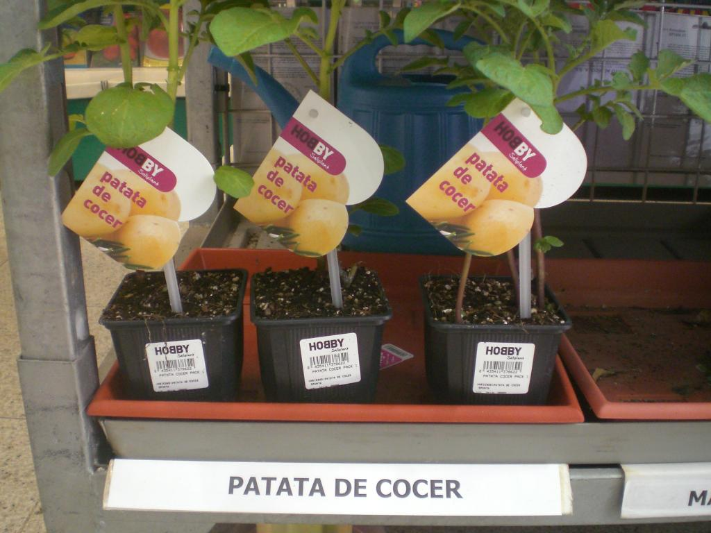 Patata de cocer m15 fitoagr cola - Tiempo de cocer patatas ...