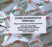 ECONEX QUADRASPIDIOTUS PERNICIOSUS (40 días)