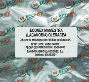ECONEX MAMESTRA (LACANOBIA) OLERACEA (40 días)