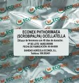 ECONEX PHTHORIMAEA (SCROBIPALPA) OPERCULELLA (40...