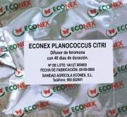 ECONEX PLANOCOCCUS CITRI (40 días)