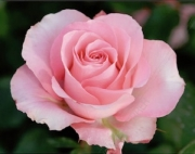 ROSAL MARTINA G.P. ® Ferrubi