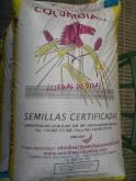 CEBADA ARTURIO R-2