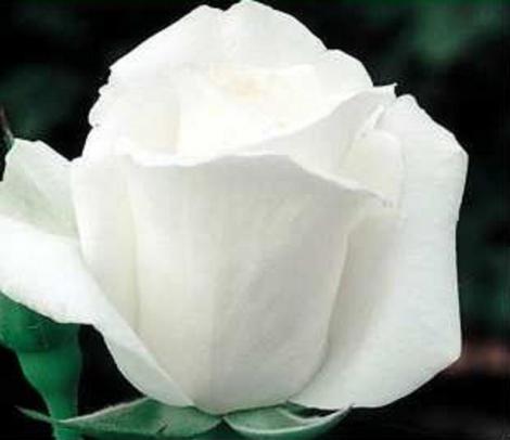ROSAL ALBA GARCIA ® - Festro