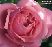 ROSAL LINE RENAUD ® - Meiclusif