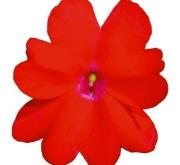 SUNPATIENS RED (84 Plantas).