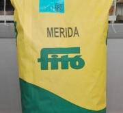 FESTUCA ARUNDINÁCEA MERIDA (5 Kgr.).