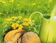 Fórmulas de Césped con Flores Silvestres