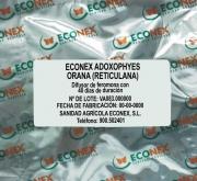 ECONEX ADOXOPHYES ORANA (RETICULANA) (40 días)