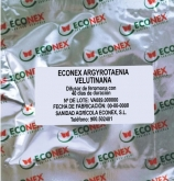 ECONEX ARGYROTAENIA VELUTINANA (40 días)