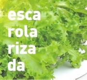 ESCAROLA RIZADA ECOLÓGICA MSE6