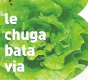 LECHUGA BATAVIA ECOLÓGICA MSE6