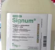 SIGNUM (1 Kgr.). [IC]