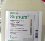 SIGNUM (1 Kgr.). [IA]