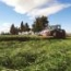 RAY GRASS WESTERWOLD TRINOVA (25 Kgr.).