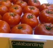 TOMATE CALABARDINA F-1 (1000 Semillas)