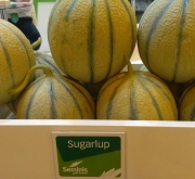 MELON SUGARLUP F-1 (1000 Semillas)