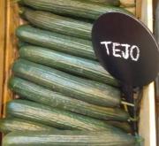 PEPINO TEJO F-1 (1.000 Semillas)