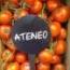 tomates fitoagricola