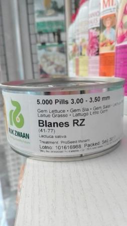 LECHUGA BLANES RZ Precisión Píldorada (5.000 Semillas).