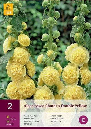 ALCEA ROSEA CHATER'S DOUBLE YELLOW