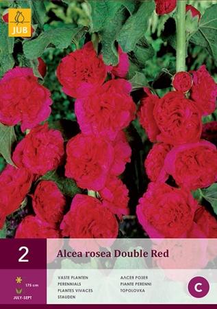 ALCEA ROSEA DOUBLE RED