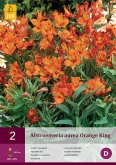 ALSTROEMERIA AUREA ORANGE KING