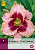 HEMEROCALLIS DARING DECEPTION