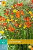 CROCOSMIA MIX