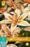 LILIUM ORANGE ELECTRIC ®