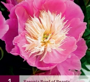 PEONIA BOWL OF BEAUTY